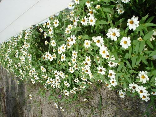 庭のプロフュージョン