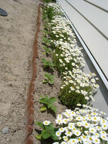 夏に向かってのボーダー花壇